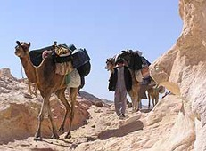 Karawane auf dem Sinai