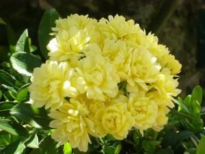 Blüten im Garten des Alkazar