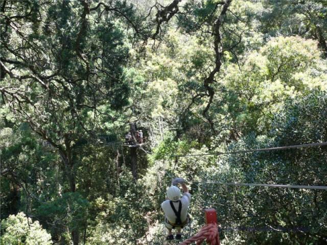 Mit Schwung von Baum zu Baum