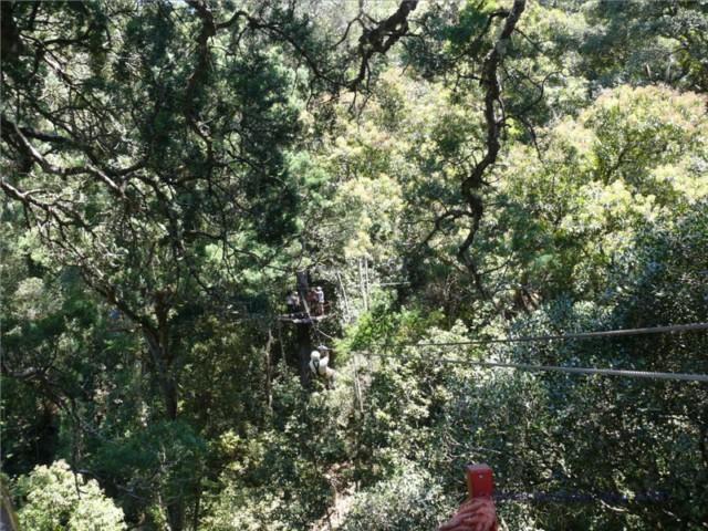 Mit Schwung geht es auf zum nächsten Baum