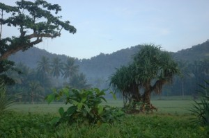 Das Dschungel-Paradies auf Java