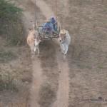 Bauern fahren zum Feld