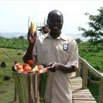 Es gibt Obst für die Schimpansen