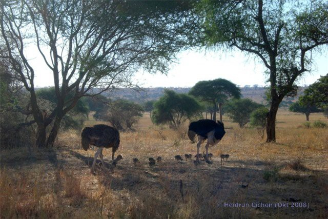 Tansania Reise Tipp: Safari in ein Natur-Paradies von Afrika
