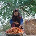 Tomatenverkäuferin