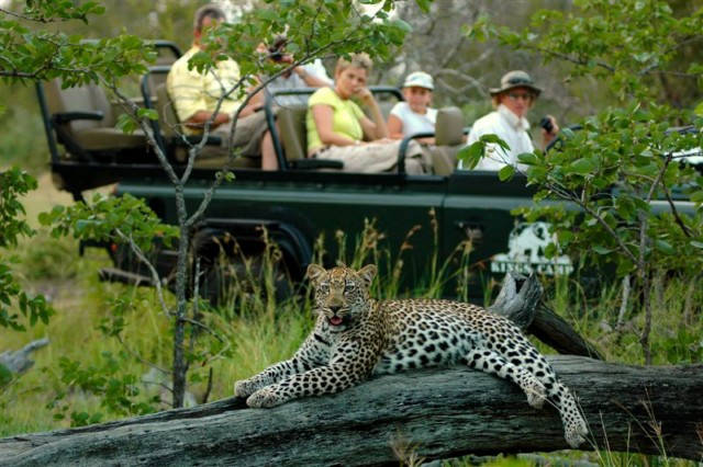 Leopard so nah Foto von Patrick Head Ranger Kings Camp