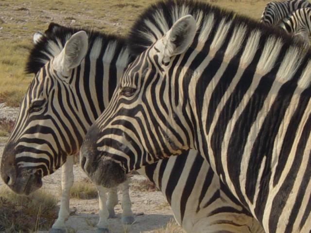 Namibia Rundreise - grandiose Landschaften