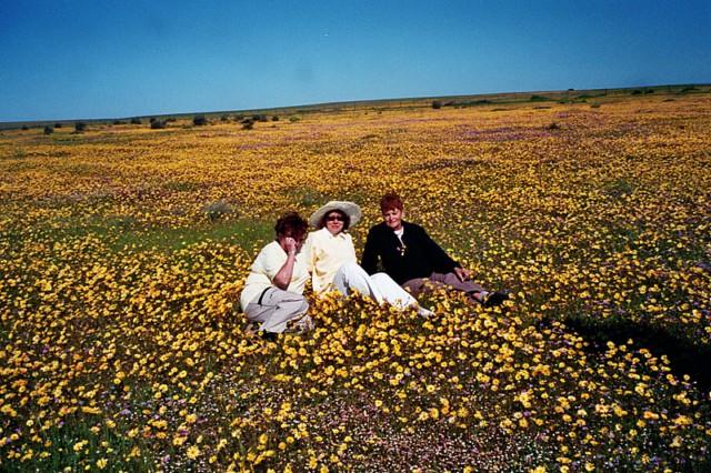 Blumenpracht im Namaqualand