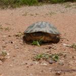 Eine Schildkröte ist auf der Piste