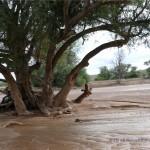 Wir fahren im Aba-Huab Flussbett