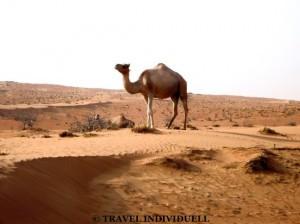Wüste im Oman - Wahiba Sands