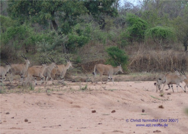 Special Tansania: Ruaha Nationalpark, Selous Game Reserve und Ras Kutani Strandresort