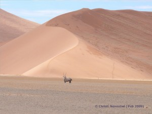 Eine Oryx Antilope