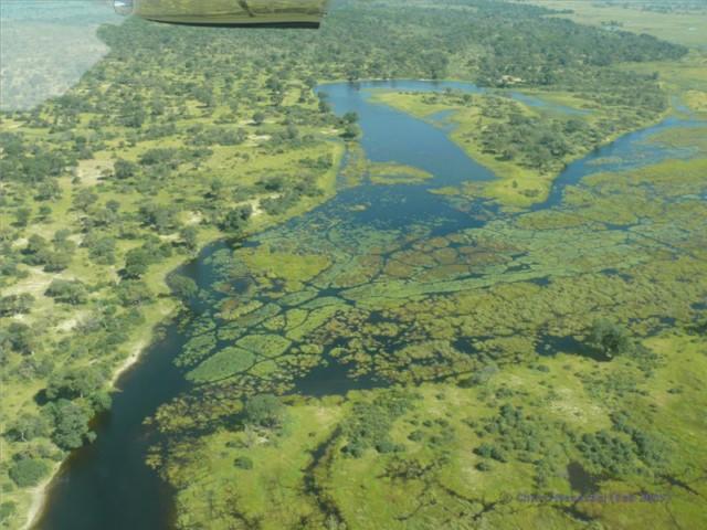 Sumpfgebiet in Botswana