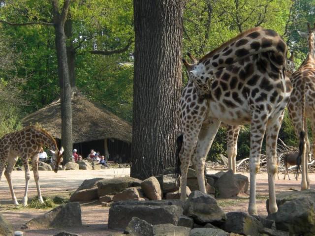 Reisetipp: Tagesausflug mit der Familie zum Hannover Zoo