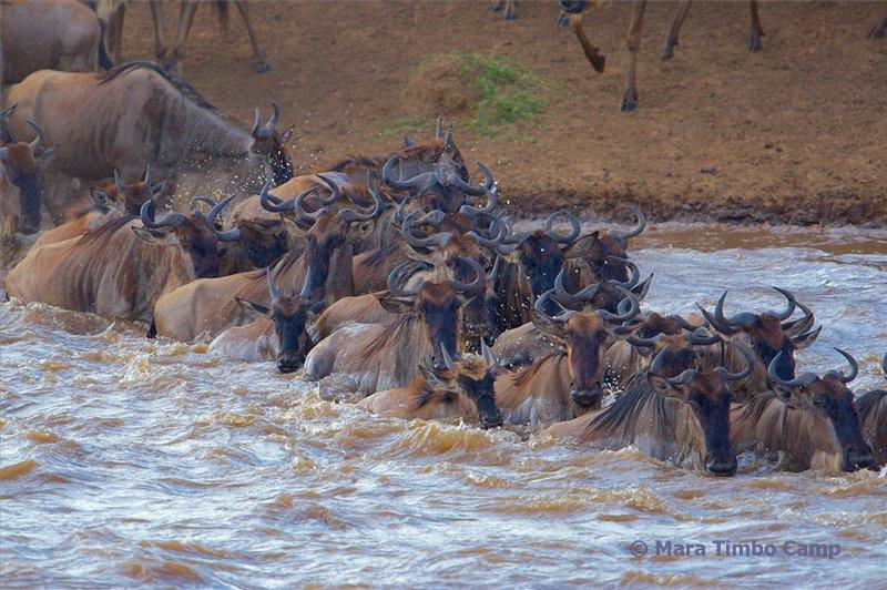 Überquerung des Mara Flusses