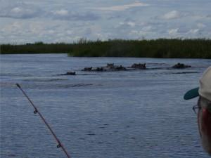 Die Flusspferde mögen uns gar nicht