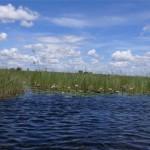 Wie im Okavango Delta