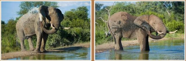 Elefanten nehmen ein Bad