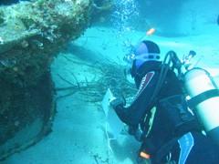 Meeres-Biologische Seminare für Taucher im Mittelmeer - Elba, Giglio - Rotes Meer - Dahab, El Quseir
