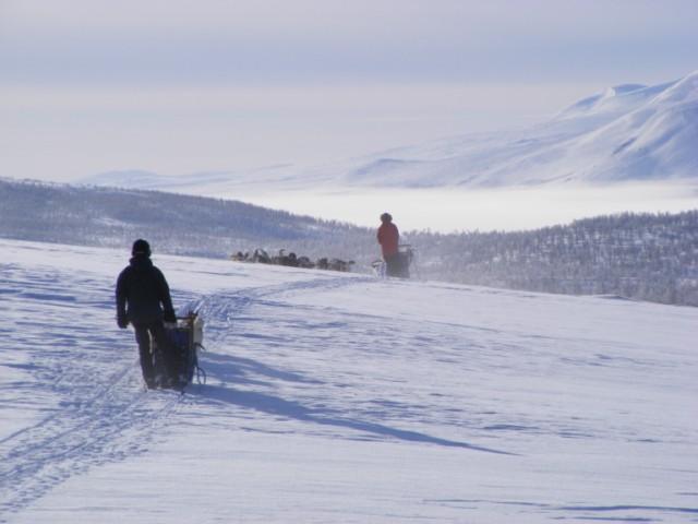 Hundeschlittentour durch die Wildnis Schwedisch-Lapplands