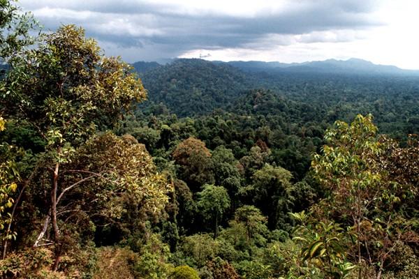 Erlebnisbericht: Orang Utans im Nationalpark von Bugit Tigahpuluh auf Sumatra / Indonesien
