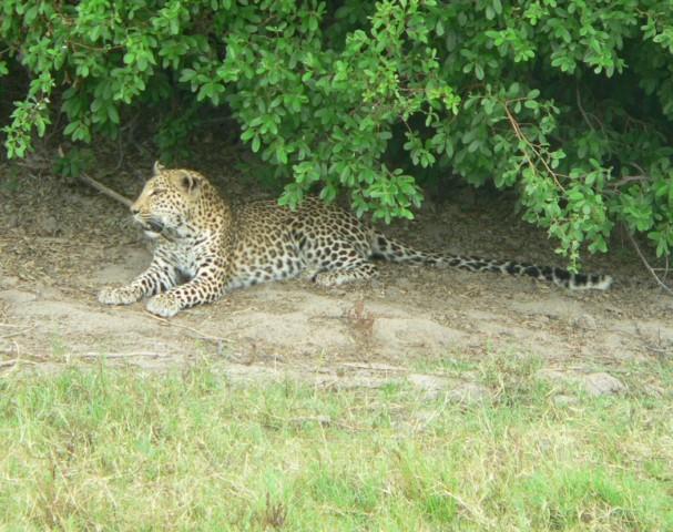 Botswana Urlaub: Eine Reise zu den Magkadigkadi Pans, Khwai River und ins Moremi Game Reserve