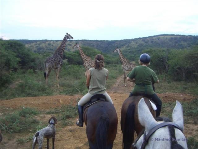 Reisetipp: Reiten in Südafrika im Pakamisa Private Game Reserve