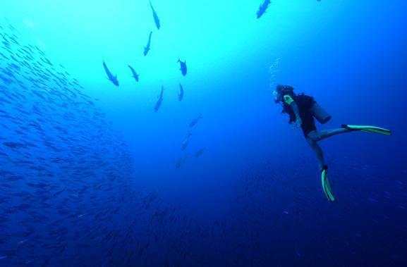 Tauchen in Bonaire: Tauchreise in die Karibik Video-Film