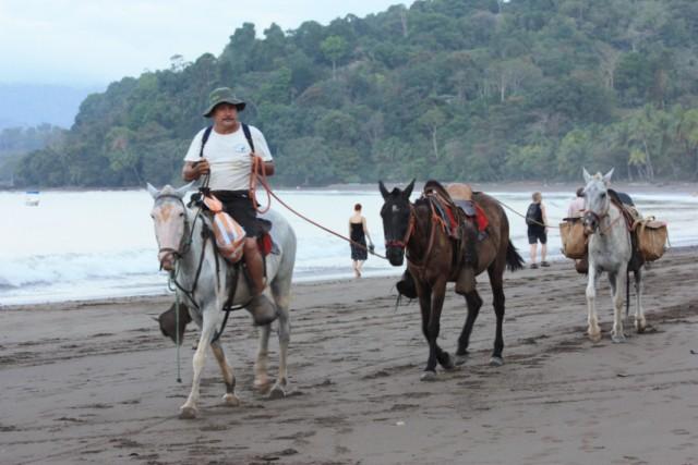Costa Rica: Die Osa-Halbinsel