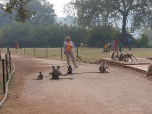 Affen in Chittorgarh