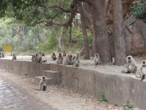 Affenfamilie im Naturschutzpark
