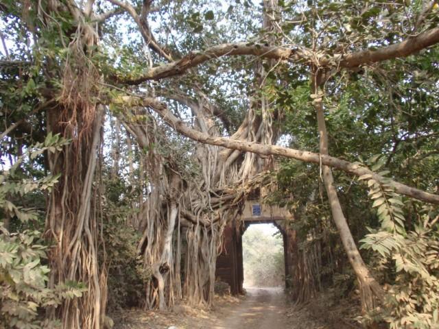 Indien Urlaubstipps - Ranthambhore Nationalpark, ein Tigerreservat in Rajasthan