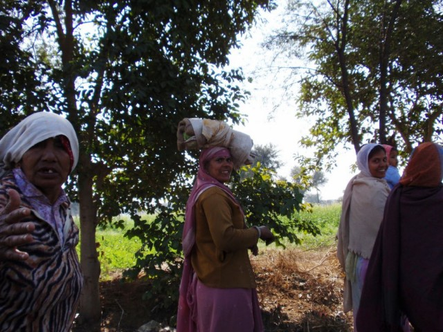 Bikaner und der Rattentempel von Deshnoke
