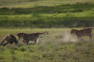 Der Tarangire Nationalpark: Ein Safari Erlebnis der Extraklasse