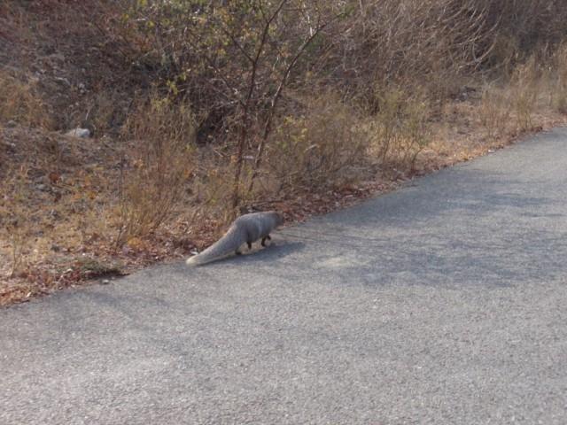 Über Mount Abu nach Udaipur, die Stadt am Pichola See