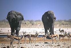 Tierparadies Etoscha