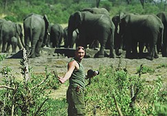 """Auf """"Tuchfühlung"""" mit Elefanten"""
