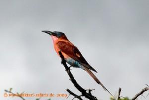 Simbabwe - Hwange Nationalpark - Karminspint - Buschwanderung