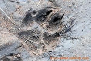 Simbabwe - Hwange Nationalpark - Wildhundspur - Buschwanderung