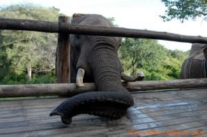 Simbabwe-Urlaub -Victoria Falls- Elefanten-Reiten - Auf Tuchfühlung