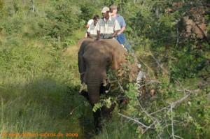 Simbabwe-Urlaub -Victoria Falls- Elefanten-Reiten - Elefant mit Wegzehrung