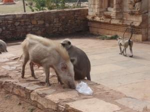 tierische Bekanntschaften