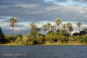Victoria Falls, Insel im Sambesi Fluss