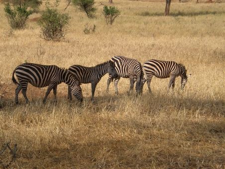Safari im Lake Manyara und Tarangire Nationalpark