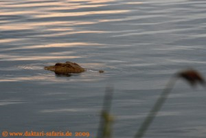 Hwange Nationalpark - Mandavu Dam - Krokodil