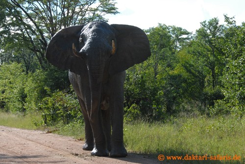 Hwange Nationalpark - Masuma - Elefant