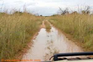 Simbabwe - Hwange Nationalpark - nach dem Regen