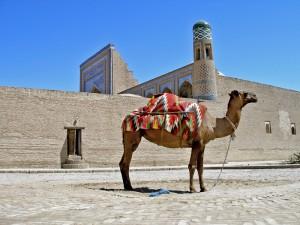 Chiwa mit Kamel