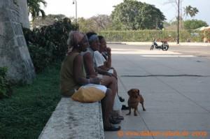 Kuba - Havanna - Schwaetzchen